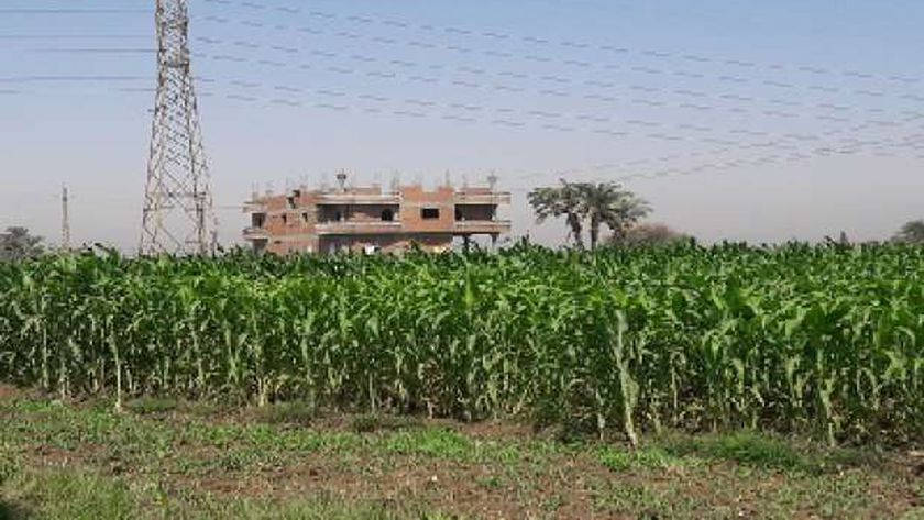 البناء على الاراضي الزراعية