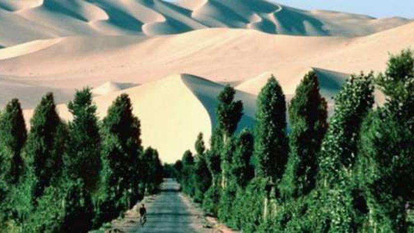 جانب من الجدار الأفريقي الأخضر العظيم