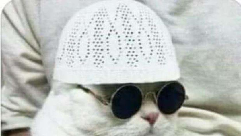 """صورة من هاشتاج """"مرشدكم قطة"""""""