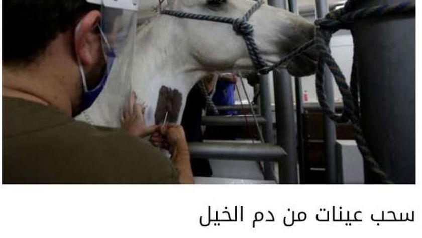 أخذ عينة من دم الخيول