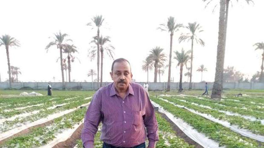 مشاتل زراعة الفراولة بالقليوبية