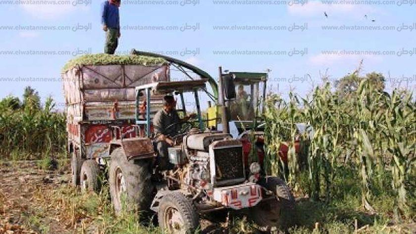 عملية حصاد السيلاج