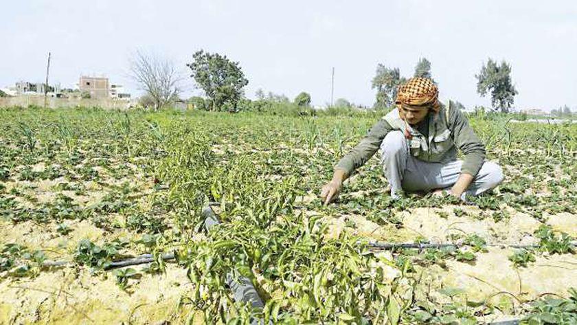 تذبذب الحراره تأثيره سلبي على المحاصيل القائمة