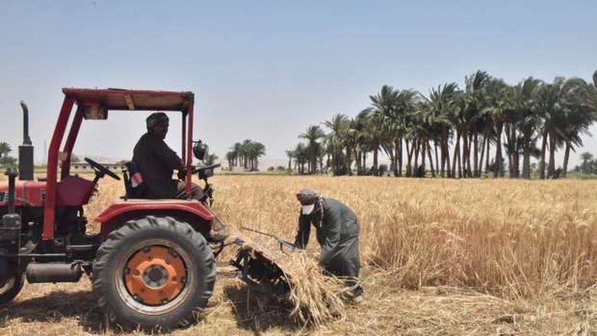 بشرة للفلاحين.. استلام الفلوس بعد 48 ساعة.. تفاصيل منظومة البنك الزراعي لاستلام القمح من المزارعين