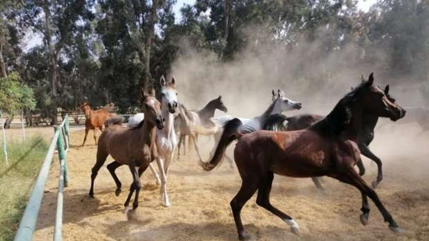 الخيول
