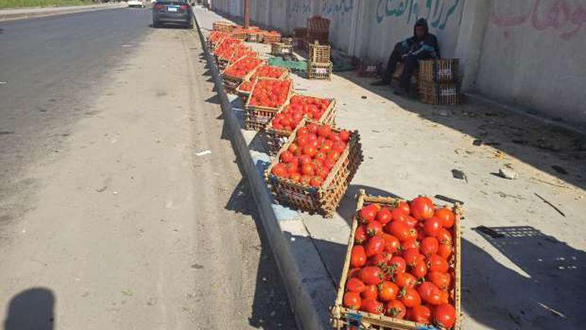 الطماطم علي أرصفة الإسماعيلية