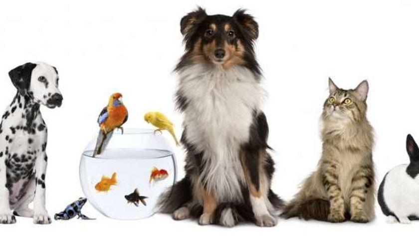 الحيوانات الأليفة تنتظر حملة التطعيم الروسية ضد فيروس كورونا