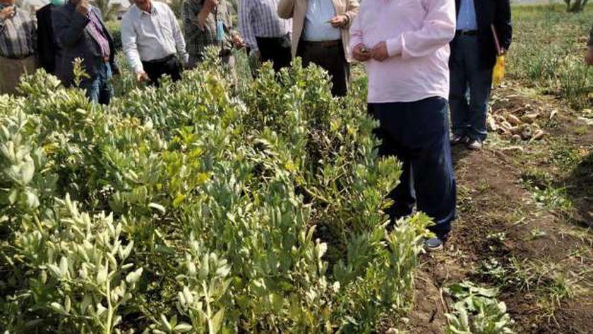 السعودية تطلب من مصر شهادة خلو الصادارات الزراعية من المبيدات