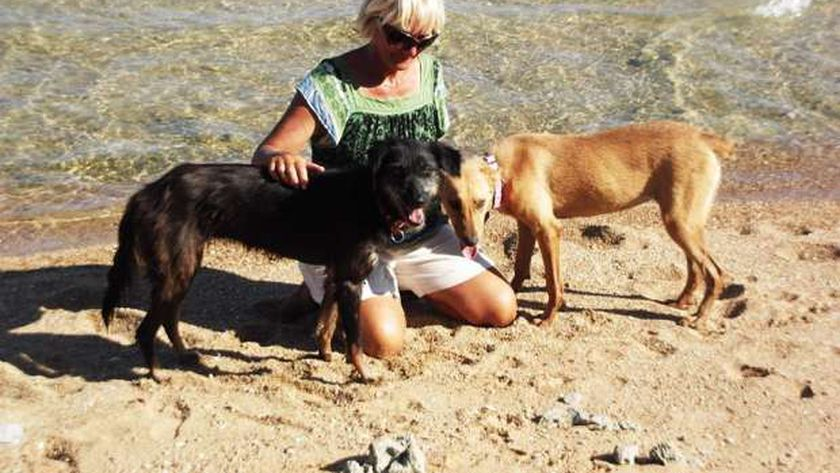 السيدة الإنجليزية ترعى الكلاب قبل وفاتها