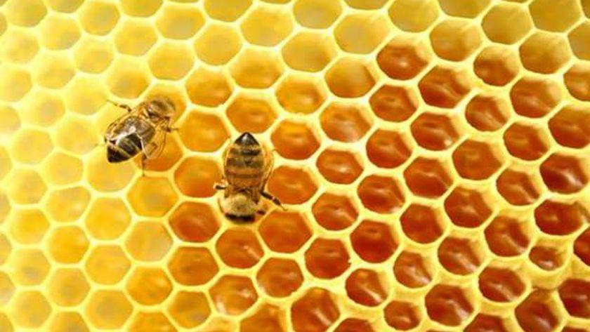 أسعار عسل النحل