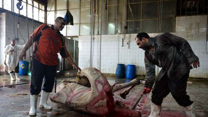 """موعد عيد الأضحى 2021 في مصر.. مواطنين يذبحون الأضحية """" أرشيفية """""""