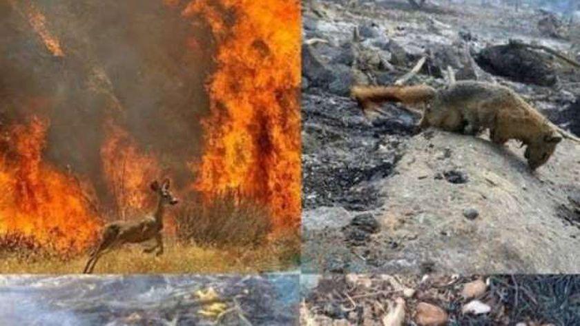 حرائق غابات في إيران
