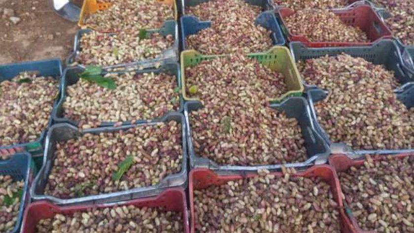 """مجلس مدينة قطور بالغربية يفض أكبر سوق لبيع التوت لمنع انتشار """" كورونا"""""""