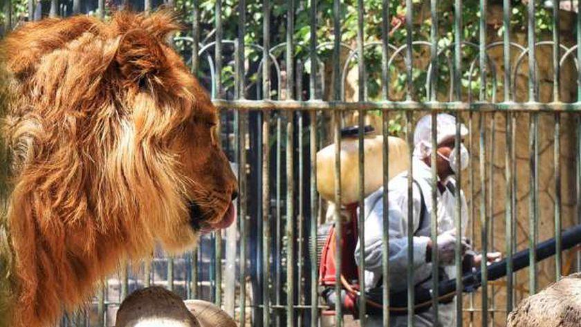 إجراءات احترازية مكثفة في حديقة الحيوانات