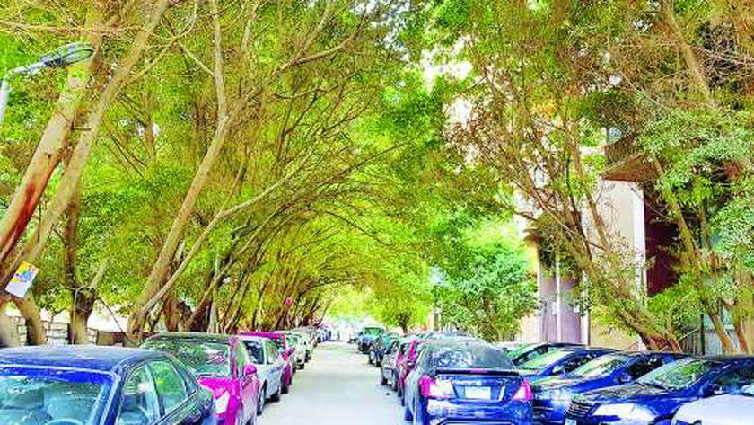 التشجير في المدن هام للتكيف مع البيئة