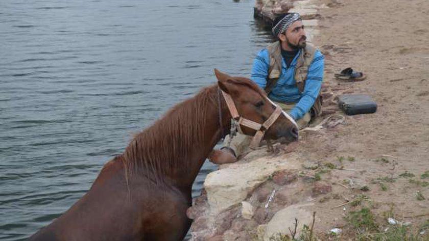 استشفاء الخيول بابو مندور