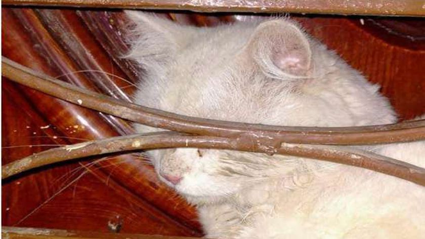 إنقاذ قطة في القليوبية