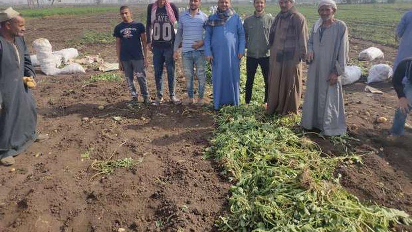 مزارعين المنيا