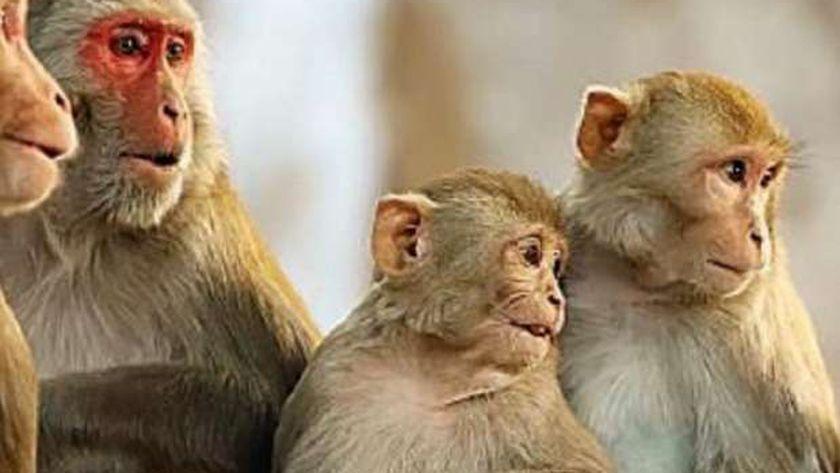 جدري القرود